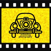Yellow Bug Photography