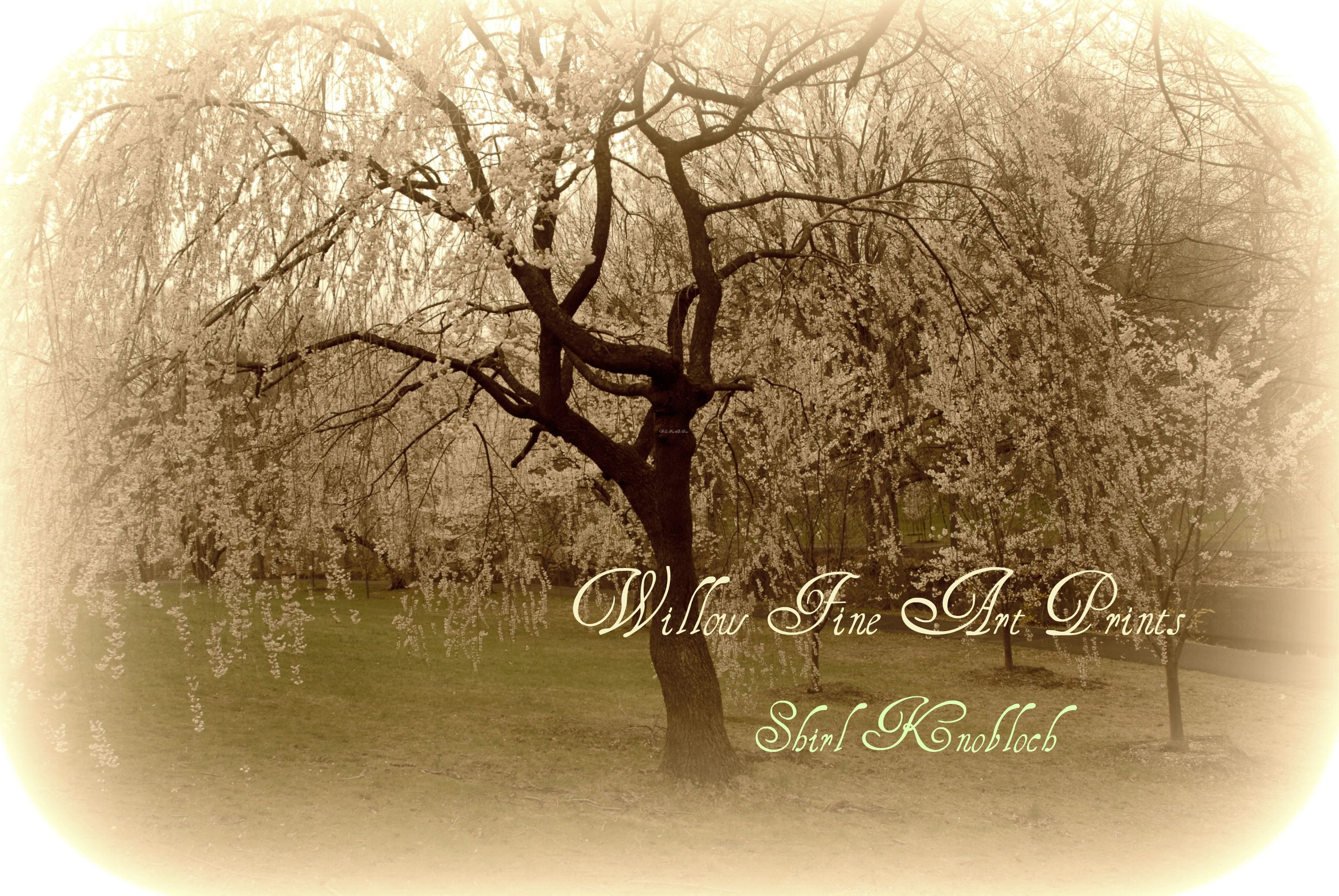 Shirl Knobloch~Willow Fine Art Prints and Photography